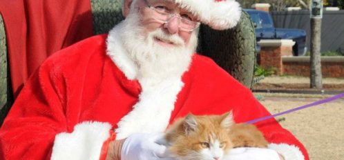 The Bloomsbury Inncat visits Santa and sits in his lap.